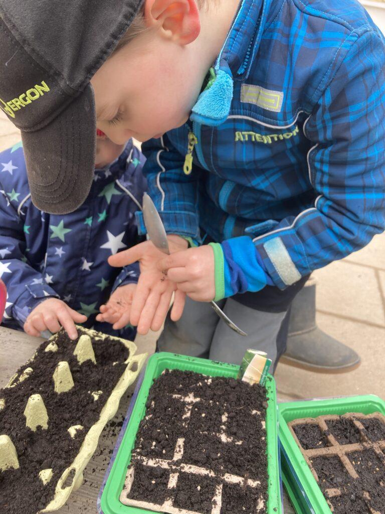 Säen der Tomatenpflanzen