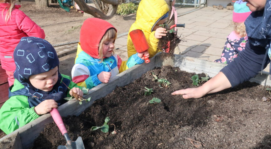 Kinder säen Erdbeerpflanzen im Hochbeet